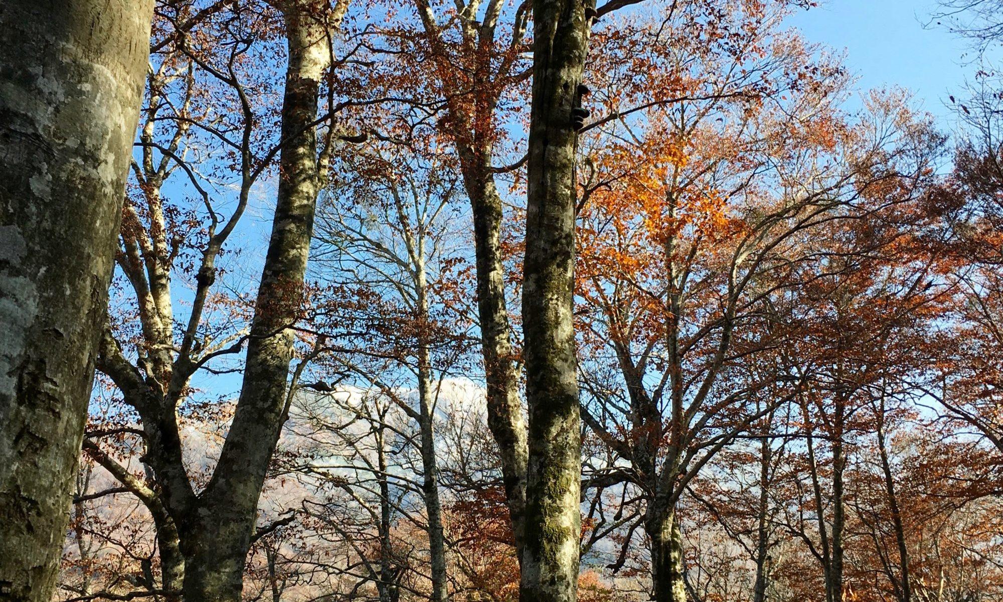 山と木の風景