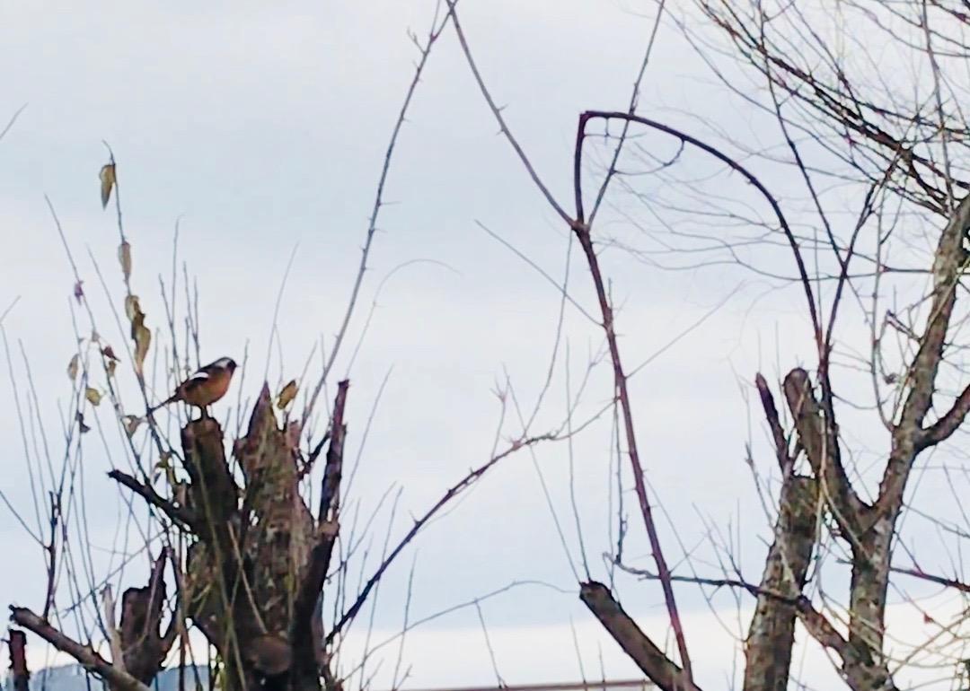 木に鳥がとまっている