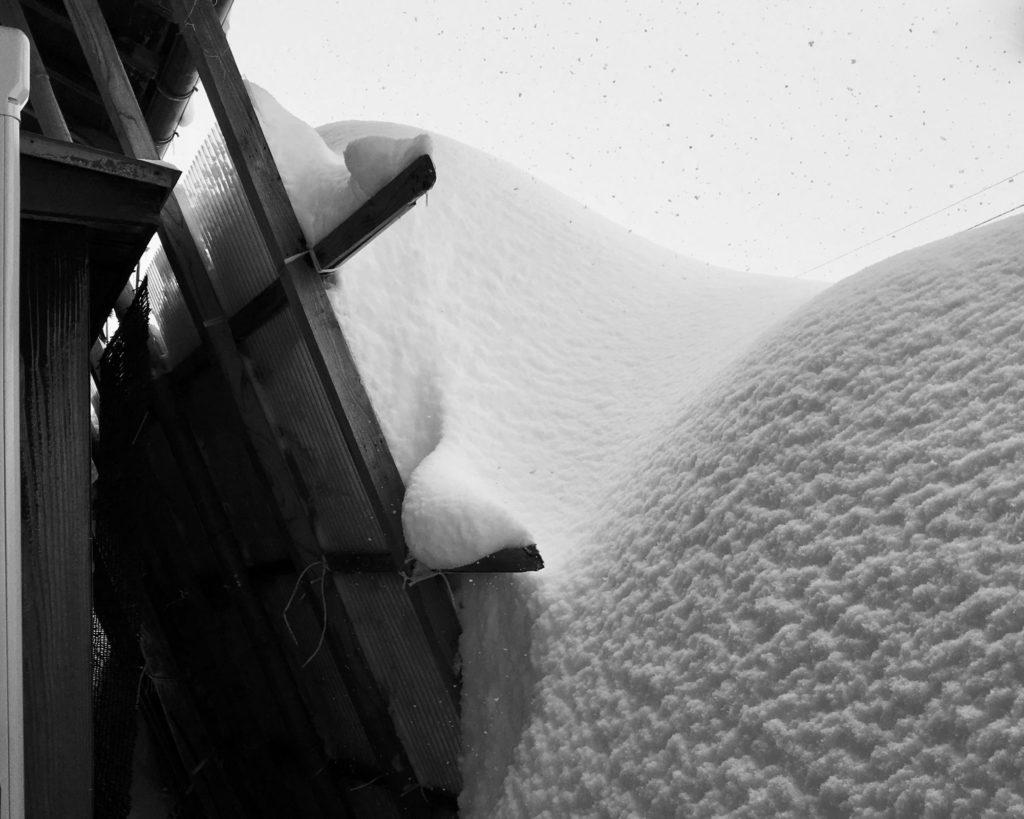 雪囲いと積もった雪